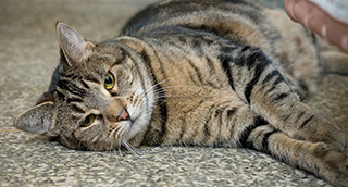Photo: Putting a stop to feline upper-respiratory infection